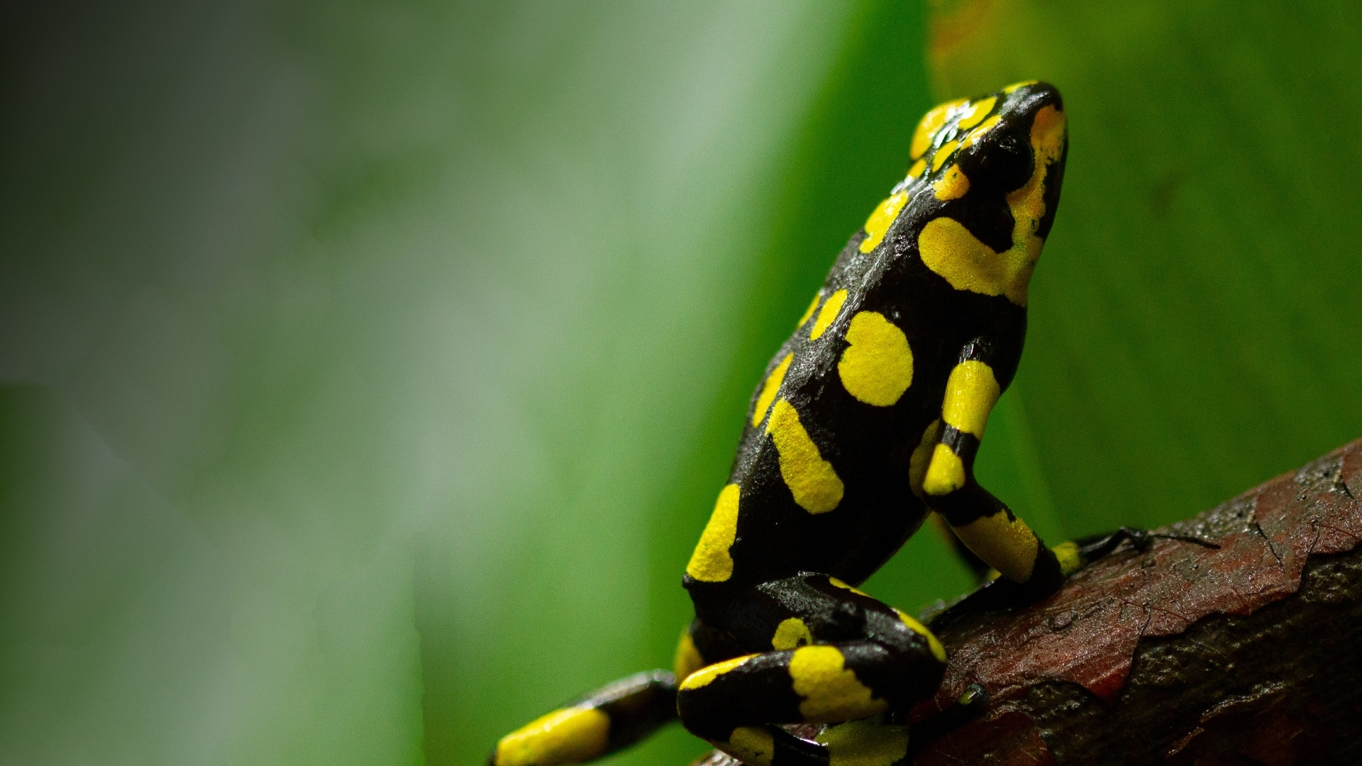 Poison Dart Frog advertising Into the Wild Columbia - Sky Nature
