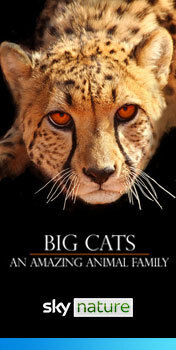 Watch Big Cats: An Amazing Animal Family on Sky