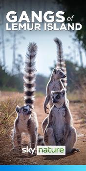 Watch Gangs of Lemur Island on Sky