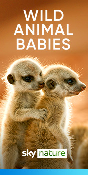 Watch Wild Animal Babies on Sky